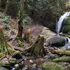 Falls on Cougar Mountain.