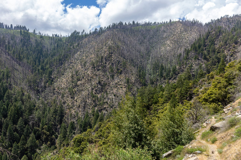 Most of the eastern flank of Deadwood Ridge was burnt a few years ago.