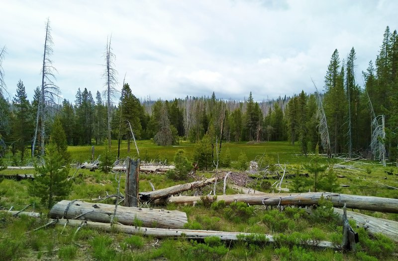 Badger Flat is the lush meadow seen past the logs along Nobles Emigrant Trail (East) at its junction with Cluster Lakes Trail.
