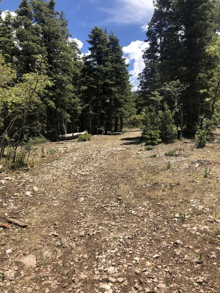 Zinker Canyon Trail T5660