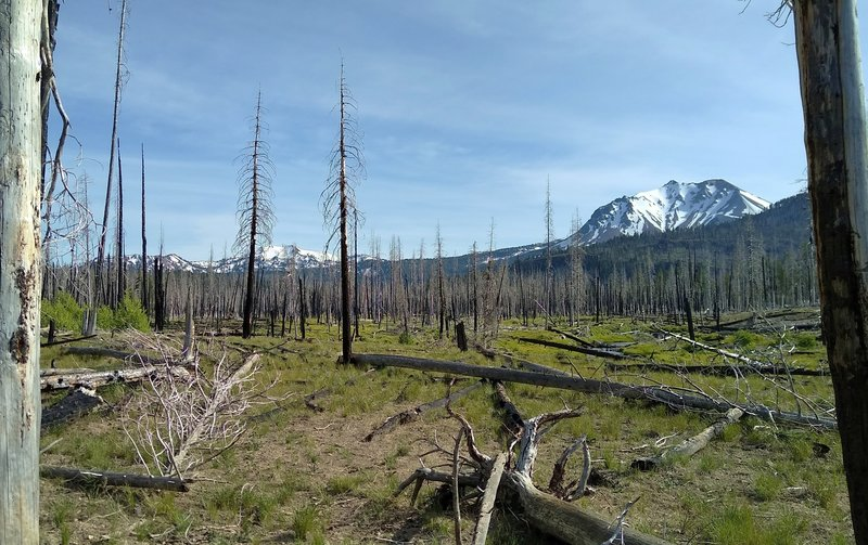 A good bit of Nobles Emigrant Trail (East) goes through the 2012 Reading Wildfire burn area. BUT that means views aren't blocked by the trees. Here are Reading Peak (left) and Lassen Peak (right).