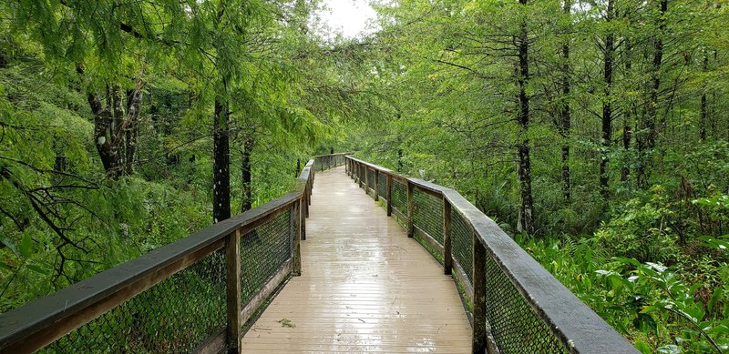 A small portion of the trail is boardwalk.