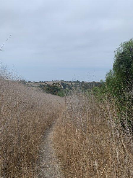 Gary's Gulch Trail