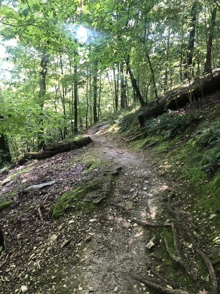 Some singletrack portion of the trail.