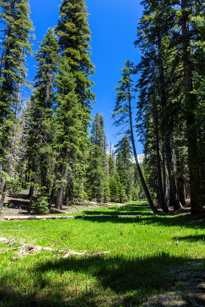 Wildman Meadow