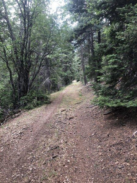 Chippeway Spur Trail T247E