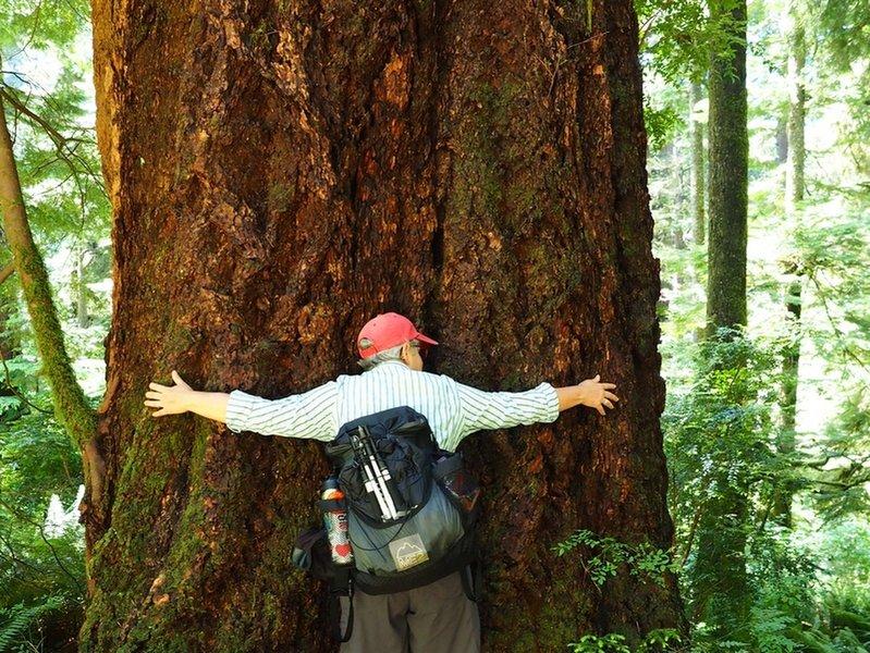 Appreciating old-growth along the Gwynn Creek Trail