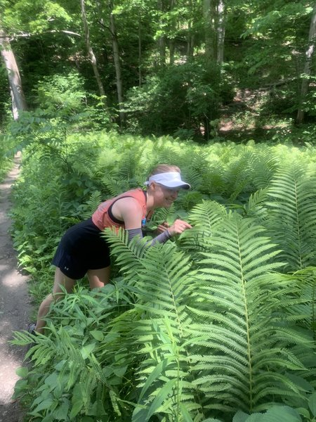 Investigating the large ferns growing along the Monkey Run Trail.