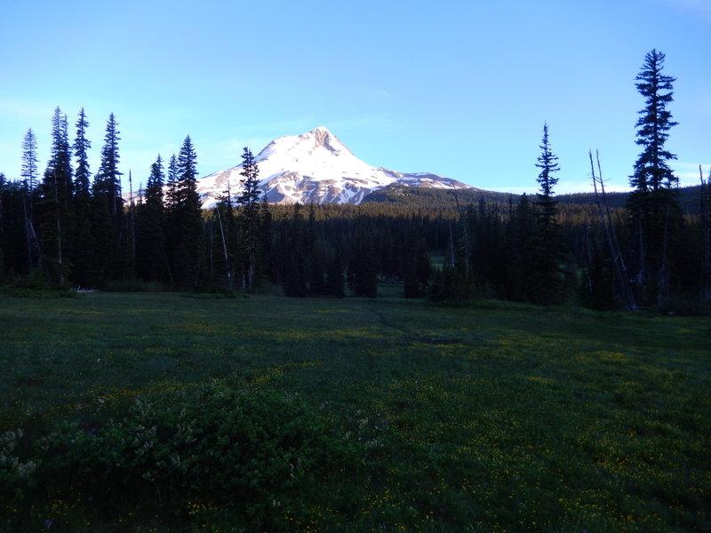 Elk meadow at dawn
