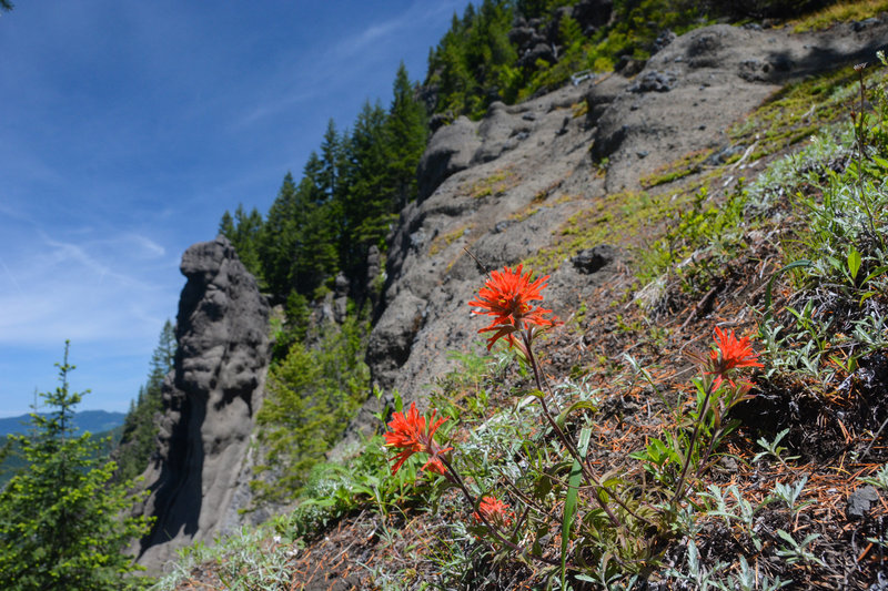 Flowers among interesting rock formations