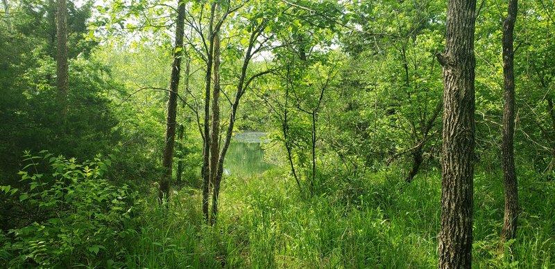 Beaver Spring Lake