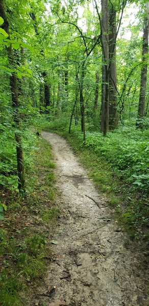 Much of the trail looks like this.  Flat and hard-pack dirt.