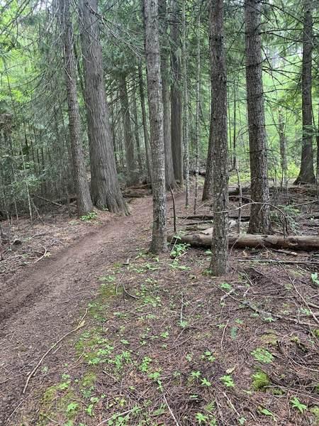 Trail 228 (Beason Meadows)