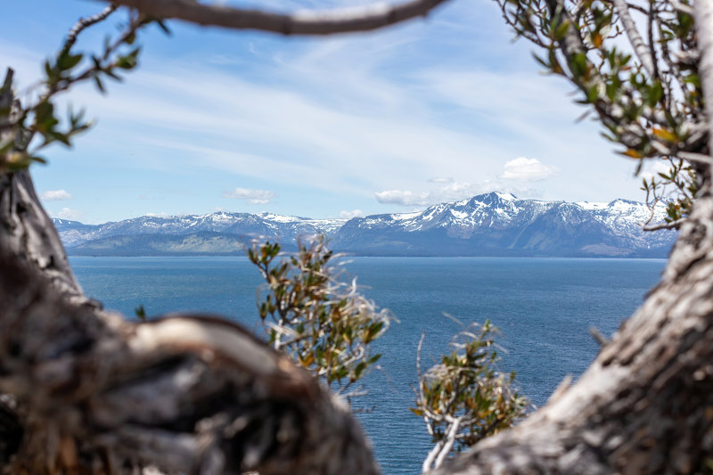 The snowy mountains across Lake Tahoe through the bushes on top of Cave Rock.