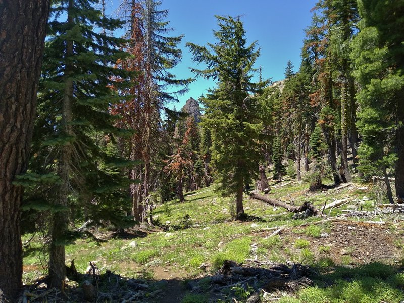 Crumbaugh Lake Trail travels through beautiful, sunlit fir forest with glimpses of rugged peaks through the trees.