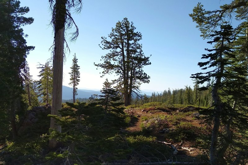 Glimpses of the distant mountains, looking east through the fir forest high on Kings Creek Trail early in the morning.