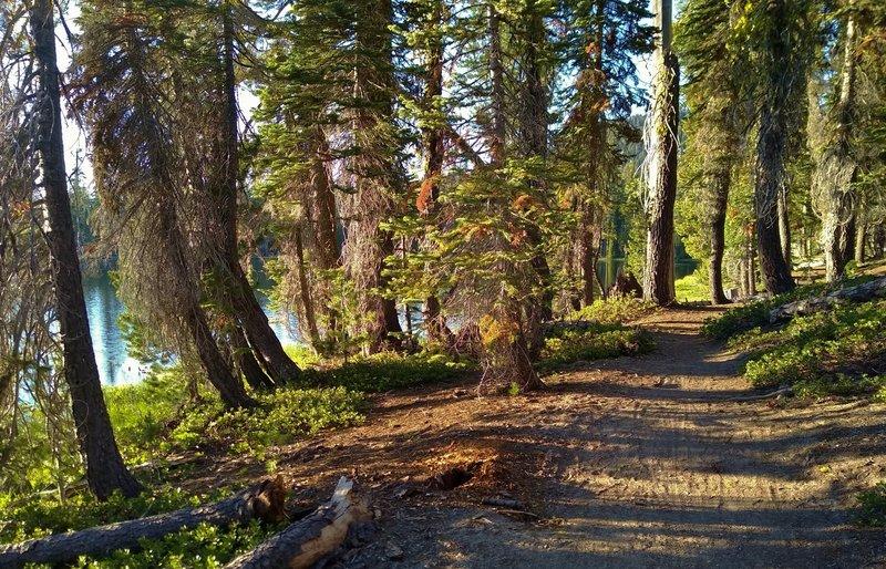 Summit Lake Amphitheater Trail runs through the beautiful pine forest as it circles Summit Lake.