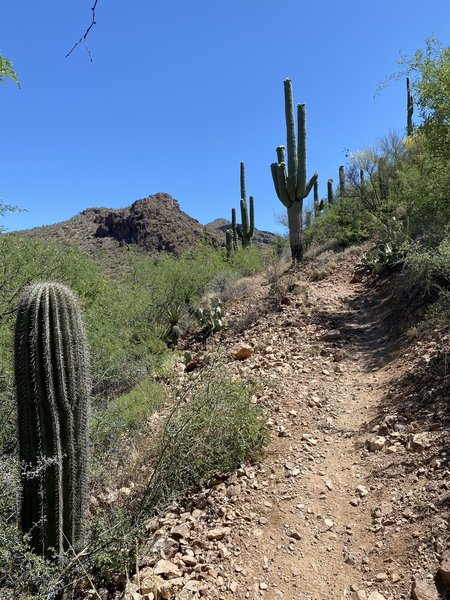 Approaching Colossal Cave Park