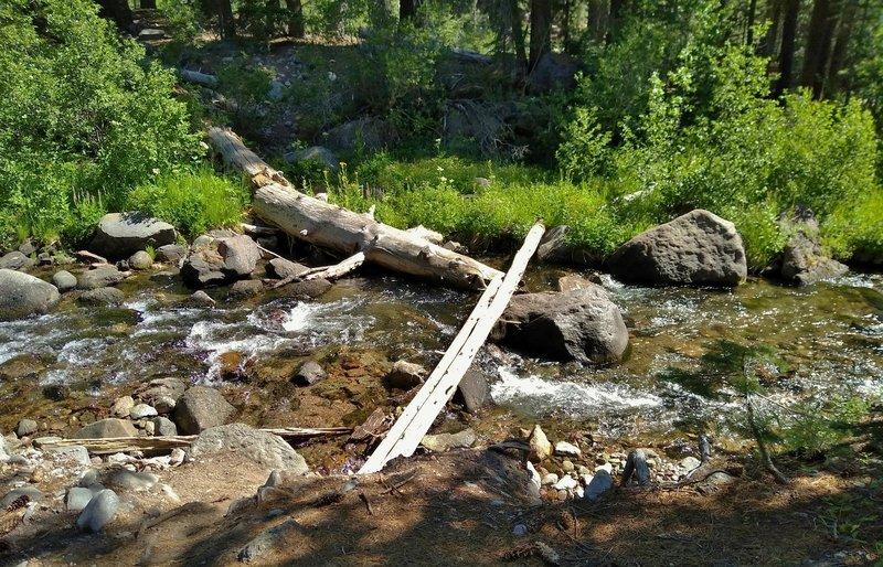 """""""Bridge"""" across Kings Creek along Kings Creek Trail deep in the backcountry."""