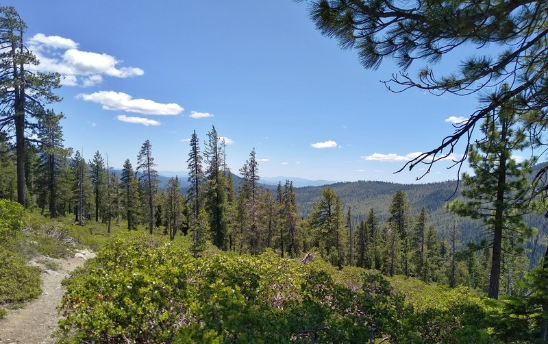 Views into the far distance to the east, as the trees thin high on Bench Lake Trail.