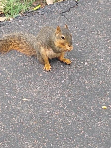 Enjoying the squirrels