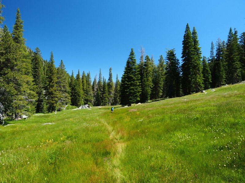 One of the several meadows the trail crosses on its way to the lake.
