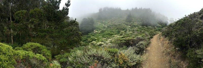 Fog on the trail.