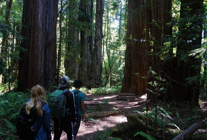 Hikers heading through the Tall Trees Grove.