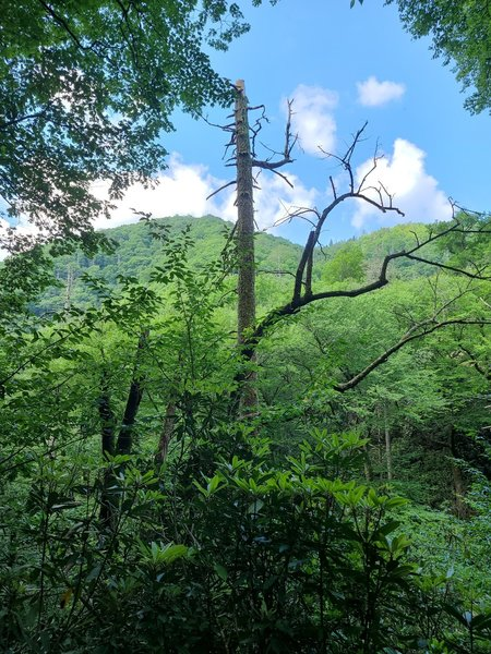 Old Growth forest on Deep Creek Trail