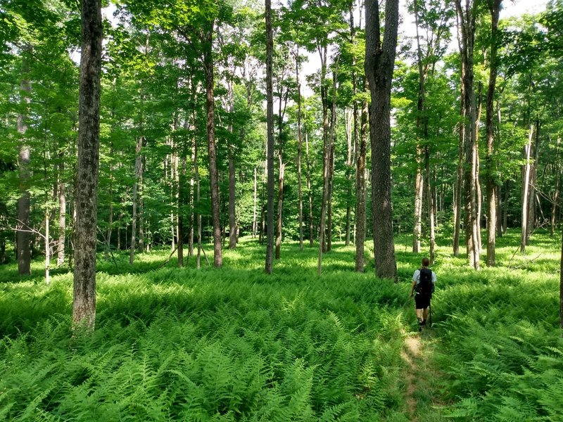 No expansive vistas on this trail, but lots of beautiful forests and clearings.