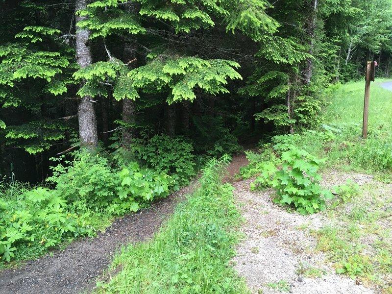 Trailhead to Iron Creek Falls