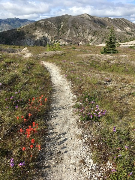 Flowers lining the trail