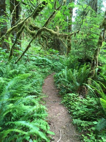 Lush underbrush