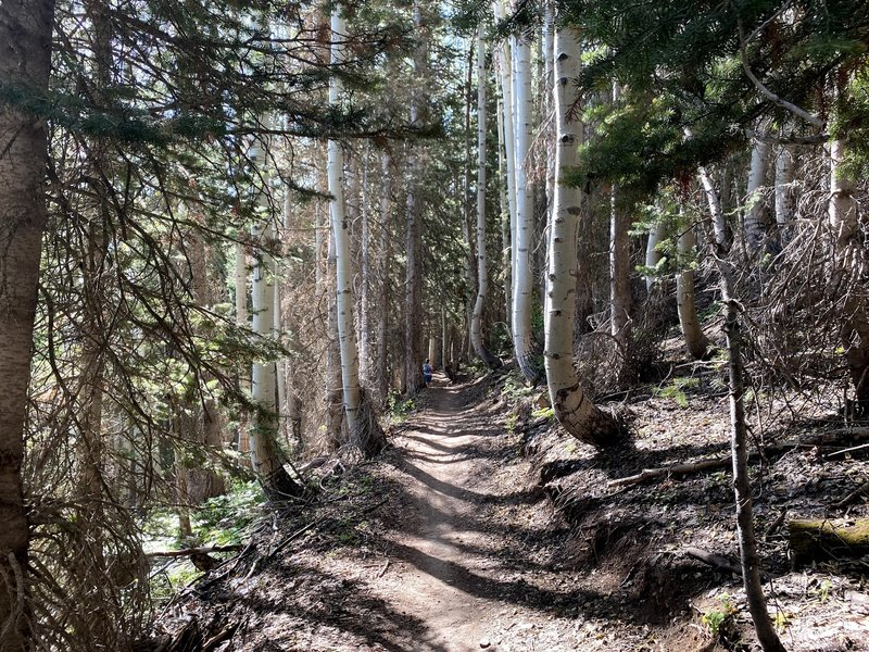 Running Through The Trees on the Mid Mountain Trail