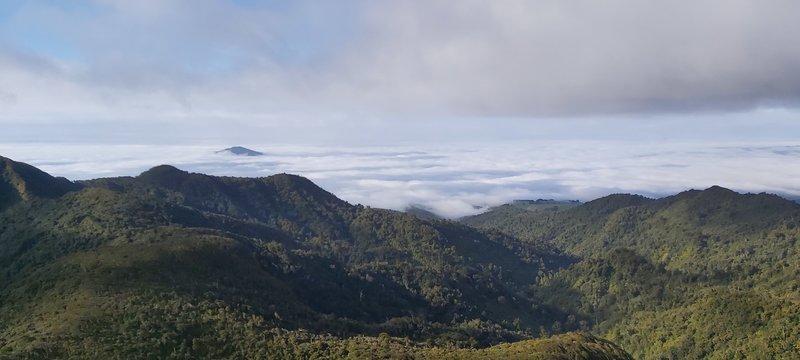 Kakipuku from Pirongia Summit.