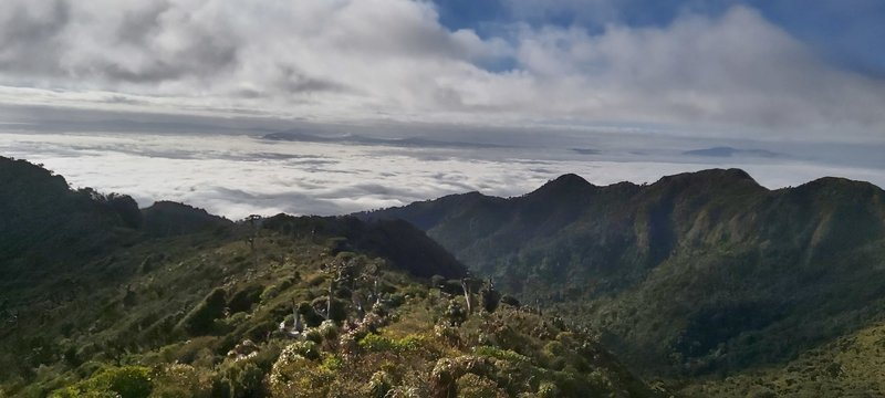From the Helipad on the Cone of Pirongia looking north.