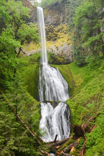 Vibrant moss helps Pup Creek Falls really pop.