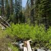 One of many small bridges across Grassy Creek