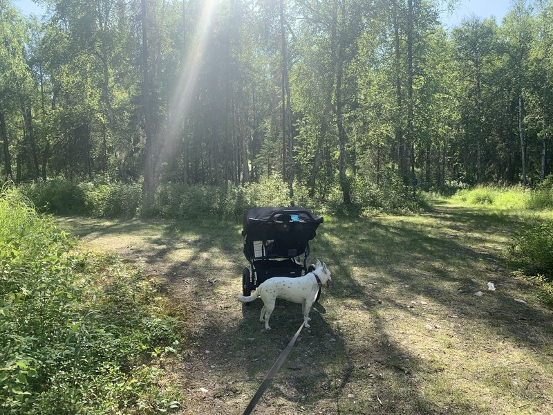 Intersecting trails about half way through. Double stroller and my blue healer on leash taking a jog with me.