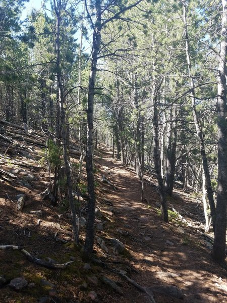 Hiking through a mostly canopied trail to the summit.