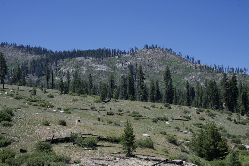 The trail moves through a burned out area. Views of the Illilouette Creek drainage can be enjoyed from this small hill.