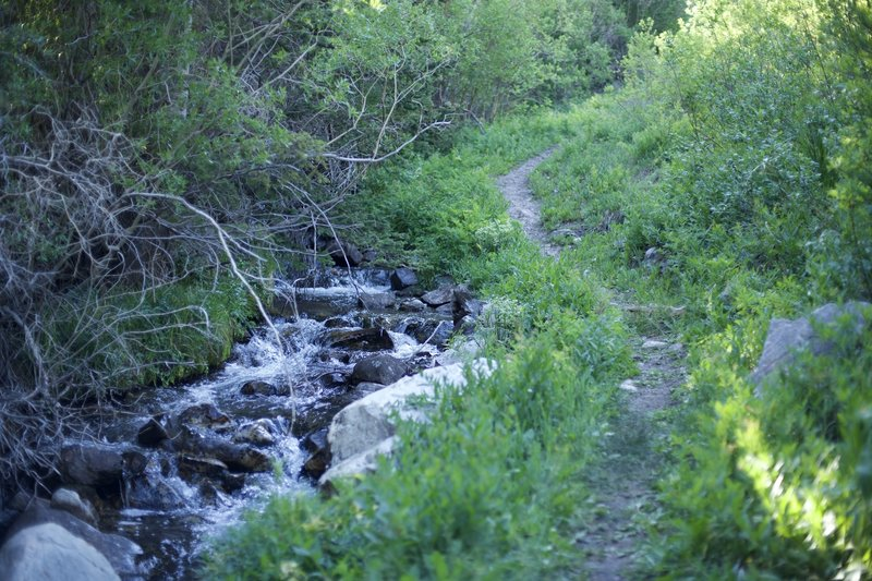 The trail follows Lehman Creek for a while as it climbs toward the Wheeler Peak campground area.
