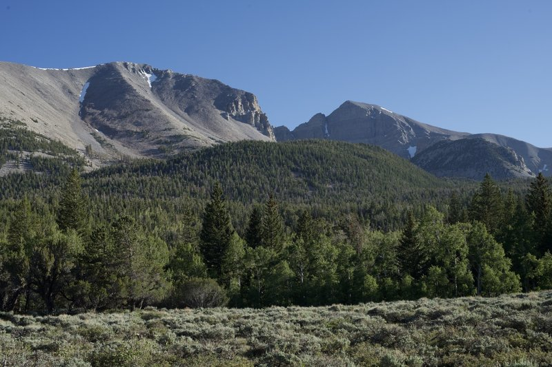 Views of Doso Doyabi and Wheeler Peak come into view as the trail passes through an open meadow.