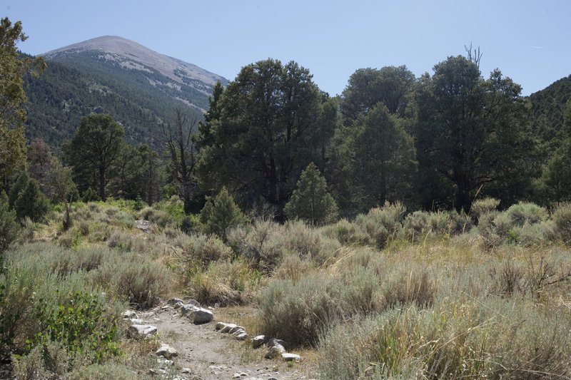 The trail departs Lower Lehman Creek Campground and makes its way toward the Upper Campground, with Doso Doyabi in view in front of you.