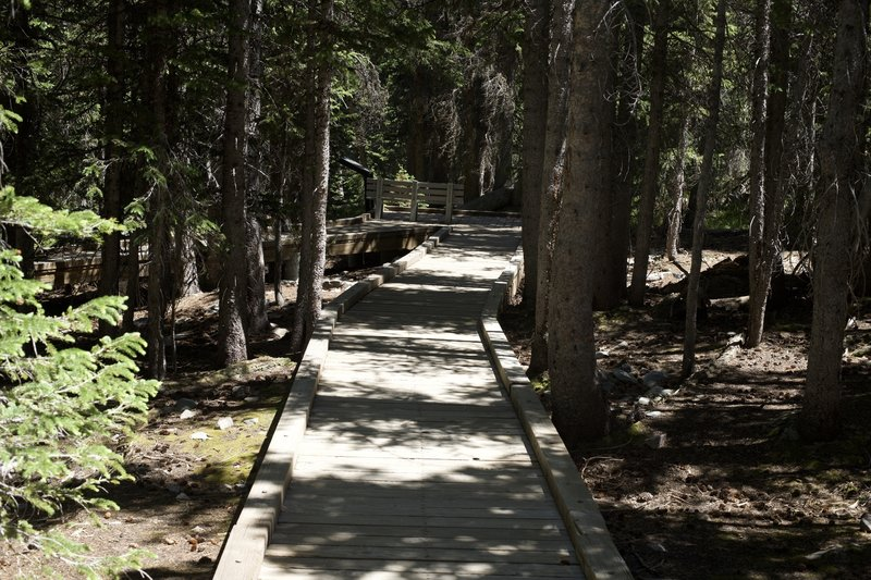 The trail continues on a boardwalk above the forest floor. Benches can be found along the trail where you can sit and enjoy the sounds of the forest around you.