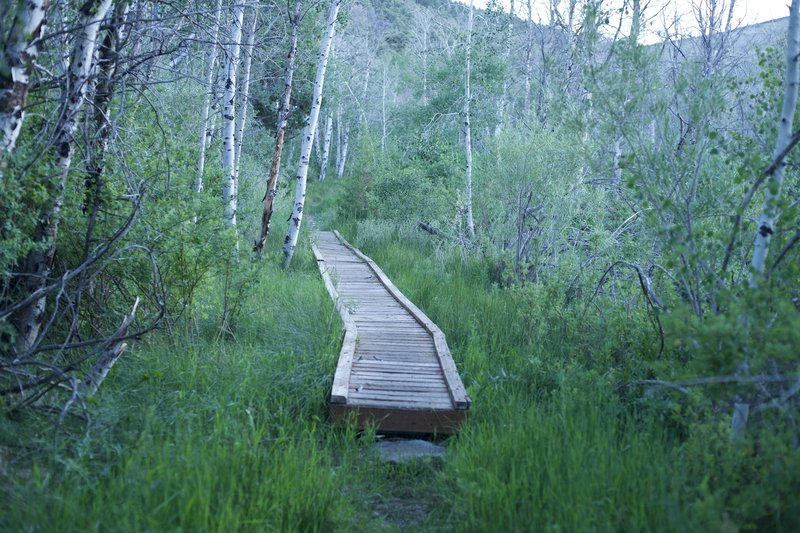 A boardwalk provides an easy way to cross a wet area in the trail.