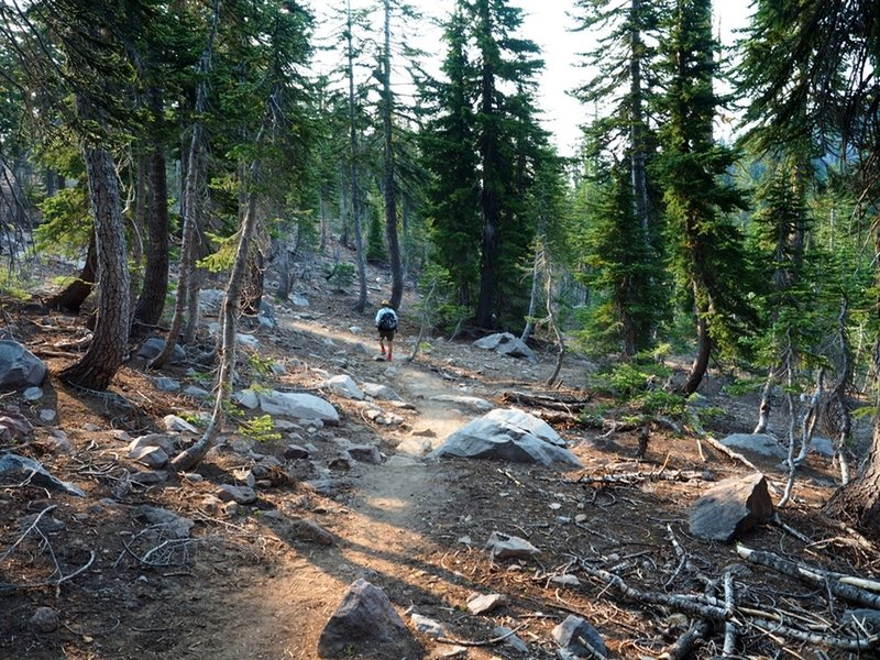 On the Panther Meadow Trail past the Gray Butte Trail junction.