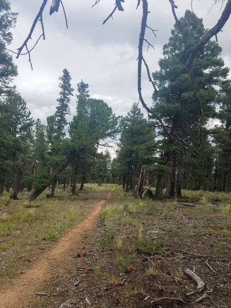 Limber Pine Trail is mostly flat, nice easy terrain.
