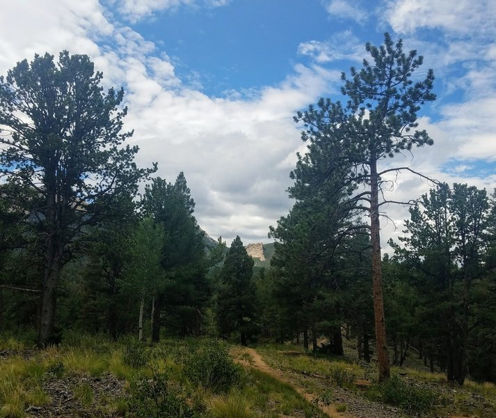 Limber Pine Trail. Easy terrain with great views.