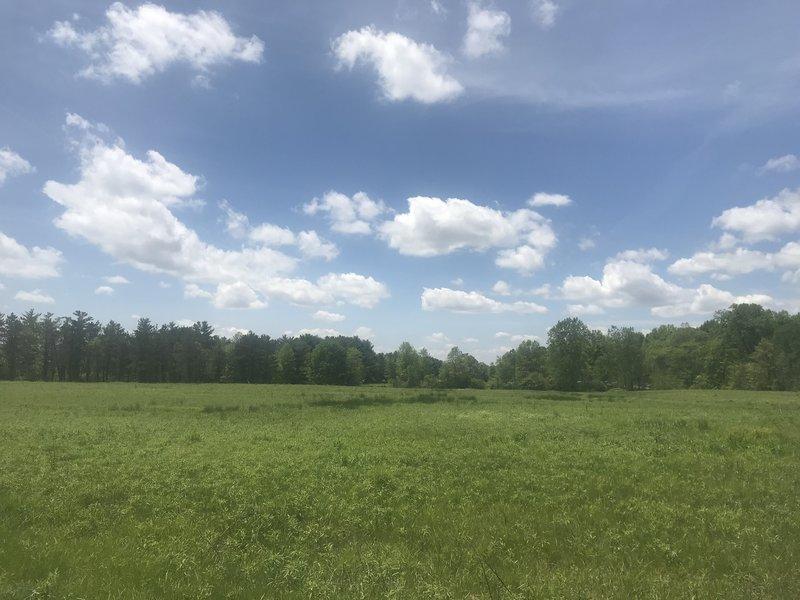 Field view.
